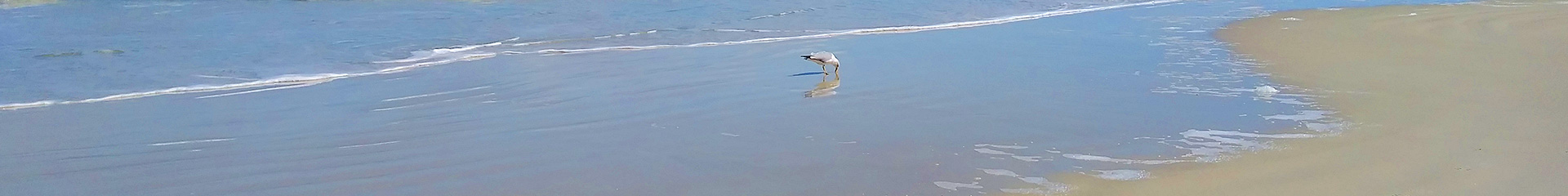 Beach image with seagull