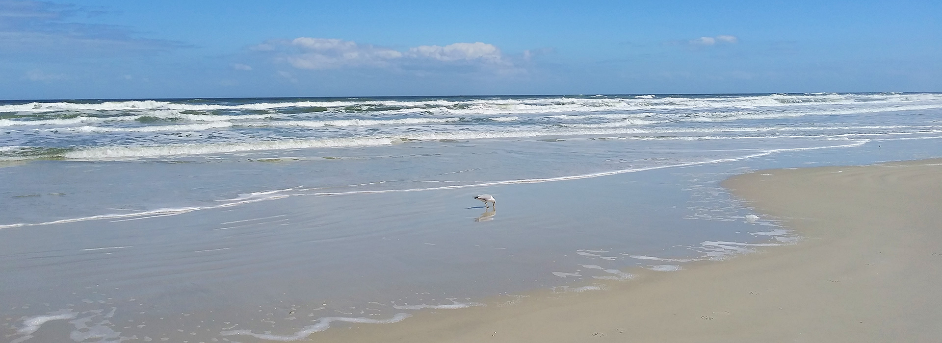 Beachfront view with seagull